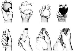 The human hand has evolved to hold and throw.